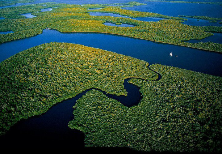 Mangroves, Parc National des Everglades - Floride
